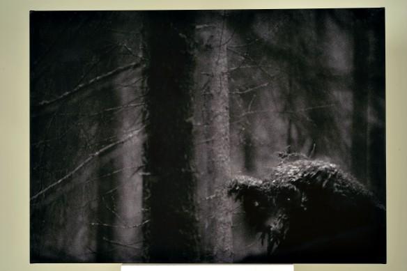 Svartvit bild föreställande mystisk Bauerskog